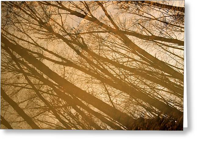 Reflections In River Greeting Cards - November Reflection In Lima Greeting Card by Dan Sproul