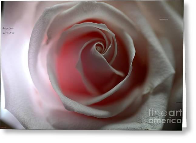 Flovers Greeting Cards - November Rose - Guns N Roses - November Rain  For You Adel  Greeting Card by  Andrzej Goszcz
