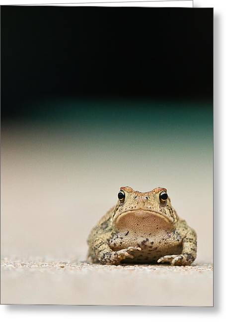 Frogs Greeting Cards - Nowhere Man Greeting Card by Annette Hugen