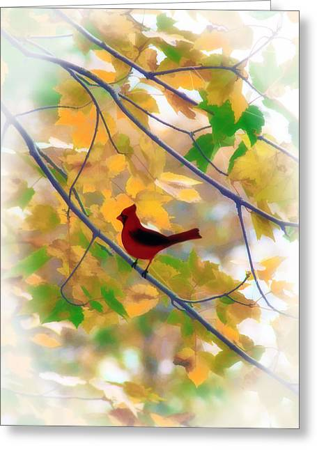 Cardinals. Wildlife. Nature. Photography Greeting Cards - Nowhere To Hide Greeting Card by Tom York Images
