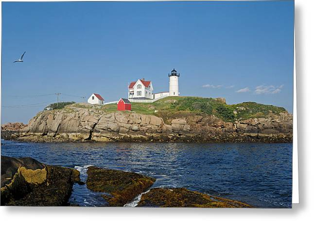 Nubble in the Day 20x30 Greeting Card by Geoffrey Bolte