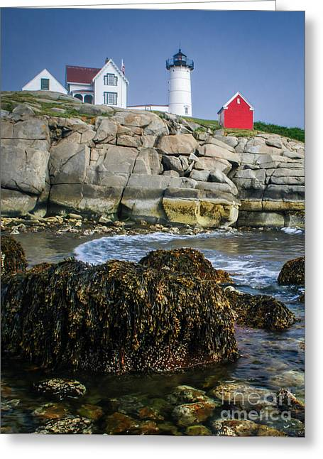 Cape Neddick Lighthouse Greeting Cards - Nubble Lighthouse at low tide Greeting Card by Scott Thorp