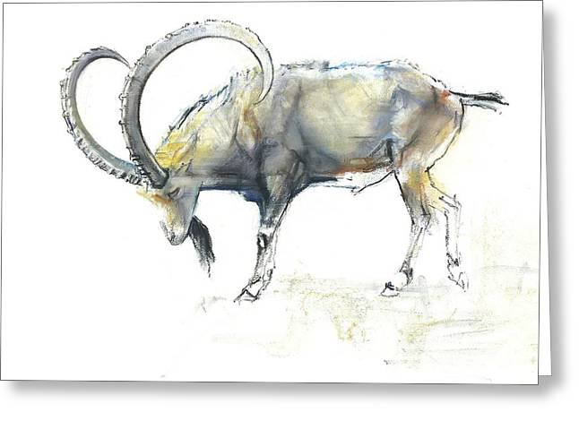 Conte Greeting Cards - Nubian Ibex Greeting Card by Mark Adlington