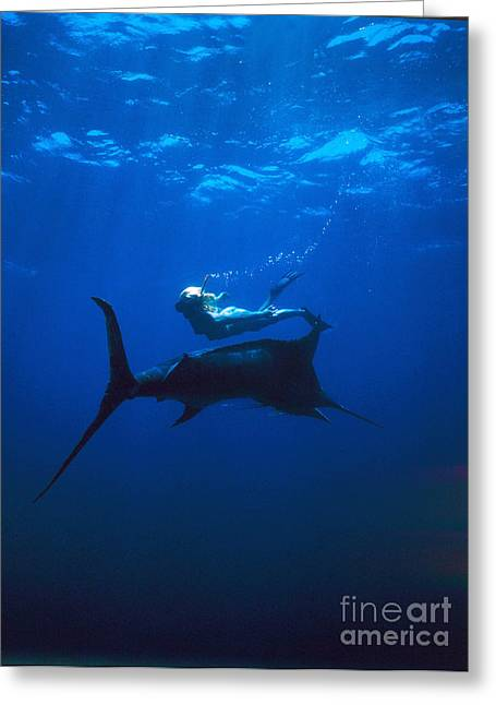 Black Marlin Photographs Greeting Cards - Nude Girl Dives Down With Marlin Greeting Card by Derek Berwin
