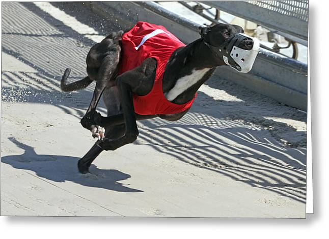 Greyhound Dog Greeting Cards - Number One Greeting Card by Randall Ingalls
