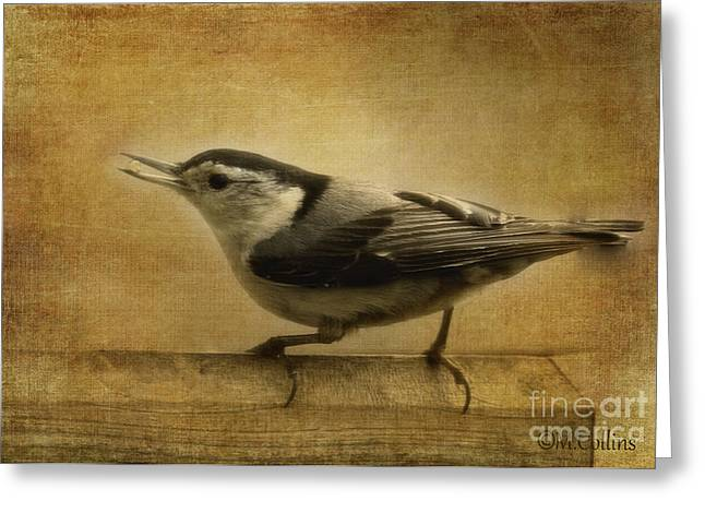 Amanda Collins Greeting Cards - Nuthatch Greeting Card by Amanda Collins