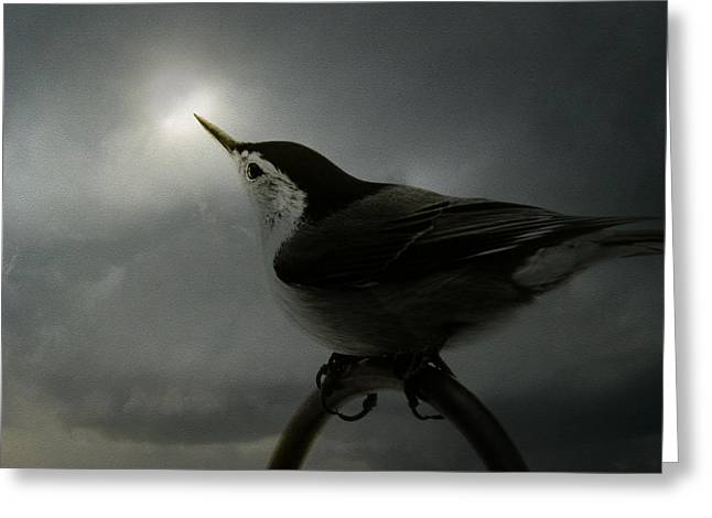 John Greenleaf Greeting Cards - Nuthatch Awaiting the Sun Greeting Card by Pamela Phelps