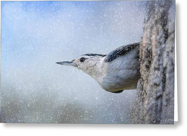 Birds In Winters Greeting Cards - Nuthatch In The Snow Greeting Card by Jai Johnson