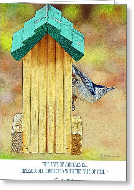 Zola Greeting Cards - Nuthatch on Bird Feeder Greeting Card by A Gurmankin