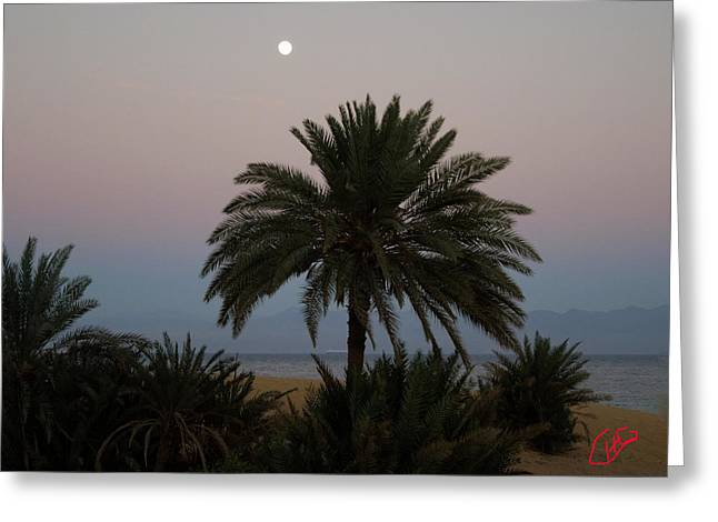 Oceon Greeting Cards - Nuweiba Beach Sinai Egypt Greeting Card by Colette V Hera  Guggenheim