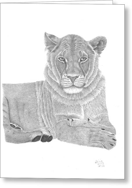 Lioness Drawings Greeting Cards - Nyah The Lioness Greeting Card by Patricia Hiltz