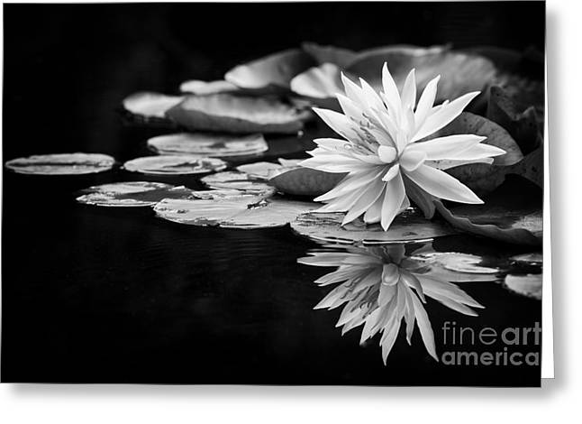Aquatic Greeting Cards - Nymphaea Maria Greeting Card by Tim Gainey