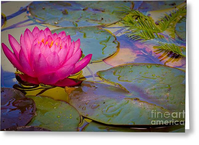 Nymphaeaceae Greeting Card by Inge Johnsson