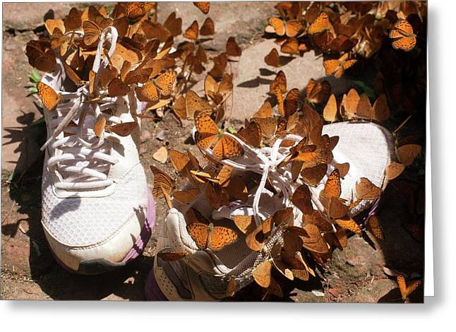 Nymphalid Butterflies Salt Puddle Feeding Greeting Card by Paul D Stewart