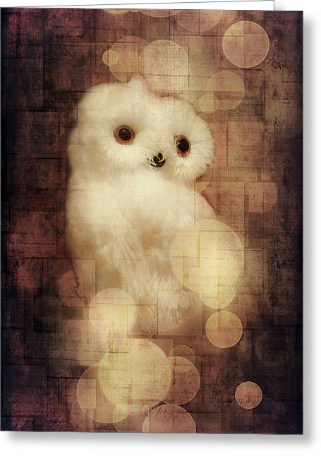 Occasion Greeting Cards - O Owly Night Greeting Card by Loriental Photography