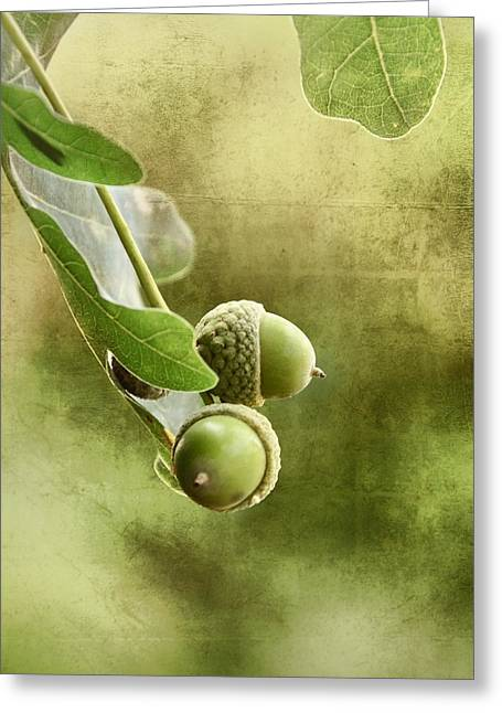 Nuts Mixed Media Greeting Cards - Oak Acorns Greeting Card by Gynt