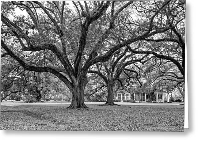 Slaves Photographs Greeting Cards - Oak Alley Grounds bw Greeting Card by Steve Harrington