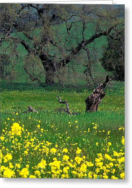 Landscape Framed Prints Greeting Cards - Oak and Mustard Greeting Card by Kathy Yates