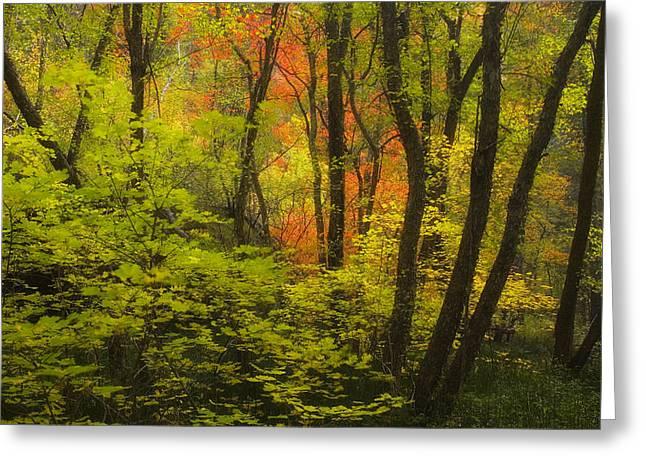 Oak Creek Splendor Greeting Card by Peter Coskun