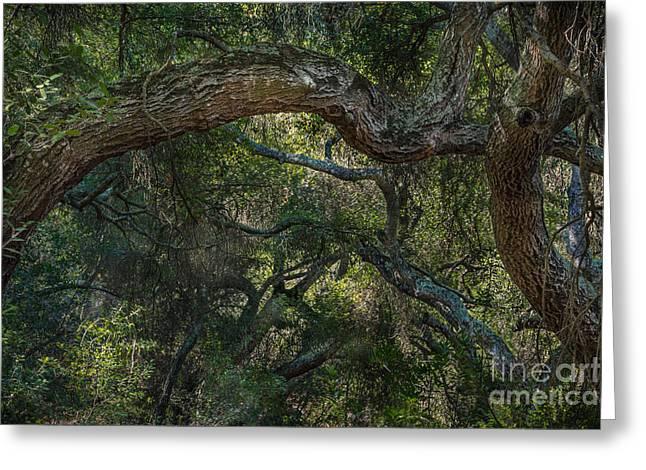 Oak Jungle Greeting Card by Alexander Kunz