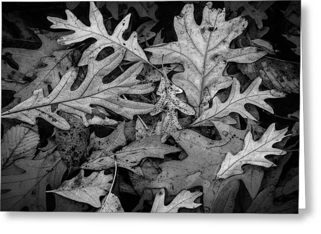 Fallen Leaf Greeting Cards - Oak Leaf Patterns Greeting Card by Randall Nyhof