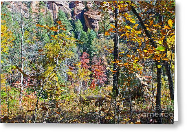West Fork Greeting Cards - Oak Leaves Greeting Card by Brian Lambert