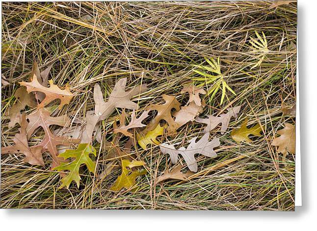 Subtle Colors Greeting Cards - Oak Leaves on Grass Greeting Card by Lynn Hansen
