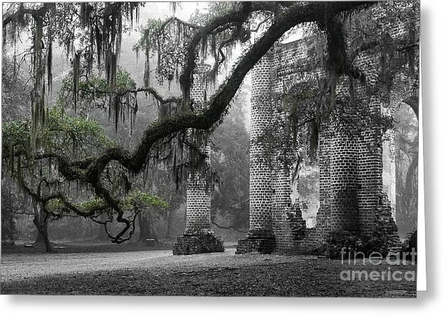 Moss Greeting Cards - Oak Limb at Old Sheldon Church Greeting Card by Scott Hansen