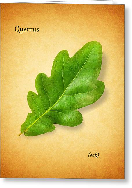 Oak Tree Greeting Cards - Oak Greeting Card by Mark Rogan