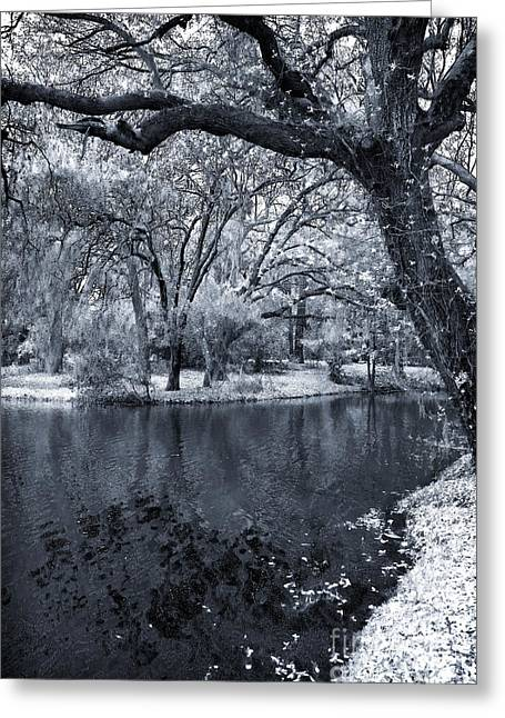 Southern Oak Trees Of The Old South Greeting Cards - Oak on the Side of the Pond Greeting Card by John Rizzuto