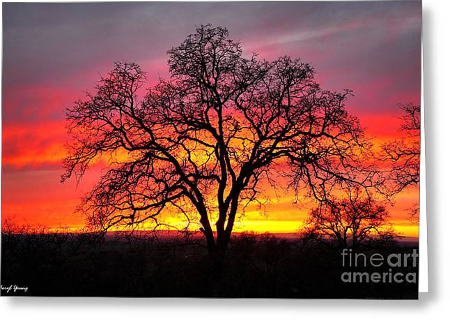 Reception Photographs Greeting Cards - Oak Silhouette Greeting Card by Cheryl Young