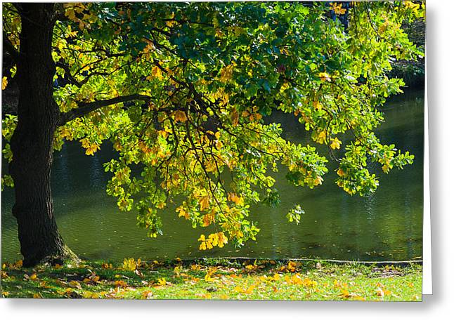 Autumn Prints Greeting Cards - Oak tree by the pond - Featured 3 Greeting Card by Alexander Senin