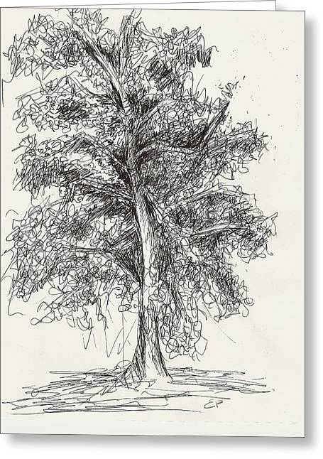 Isolated On Black Background Greeting Cards - Oak Tree Greeting Card by Elise Palmigiani