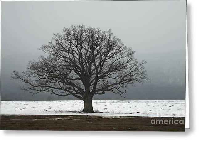 Whole Field Greeting Cards - Oak Tree In A Field In Winter Greeting Card by Scott Camazine