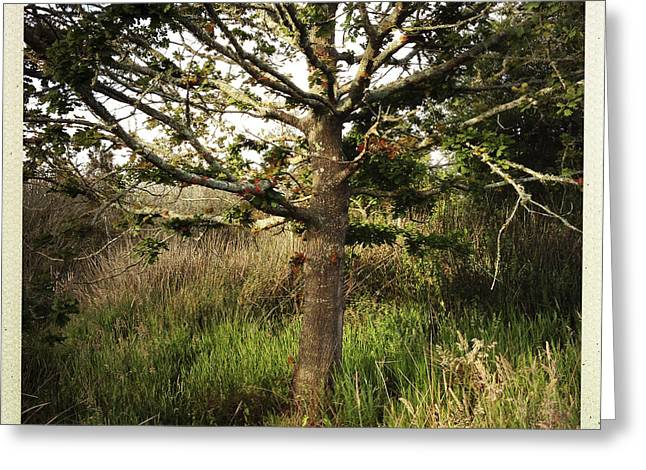 Autumn Photographs Greeting Cards - Oak tree Greeting Card by Les Cunliffe