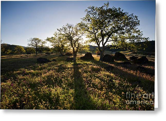 Vetch Greeting Cards - Oak Tree Shadows Greeting Card by Sean Bagshaw