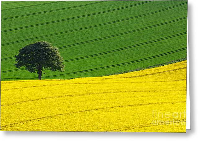 Landscape Photos Greeting Cards - Oak tree split Greeting Card by Richard Thomas
