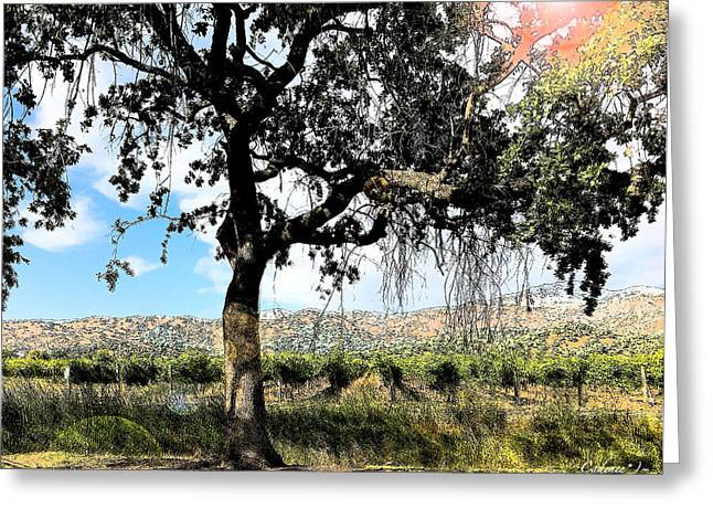 Oak Tree Yountville 22 Greeting Card by Cadence Spalding