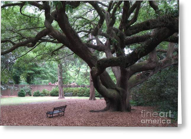 Garden Scene Photographs Greeting Cards - Oak Trees - Hopeland Gardens - Aiken South Carolina Greeting Card by Kathy Fornal