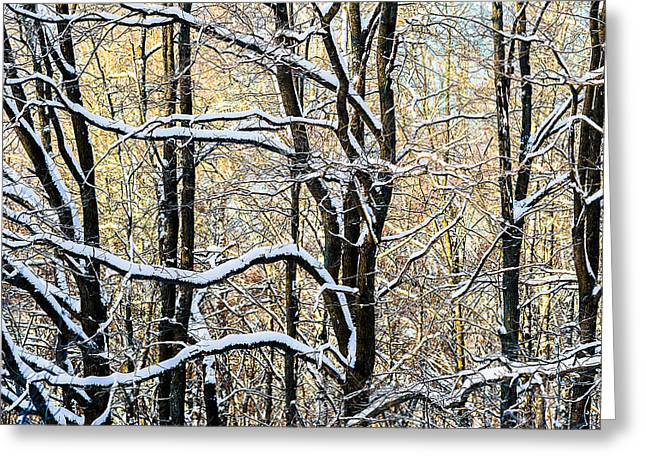 Big Chill Greeting Cards - Oak Trees In Winter Greeting Card by Alexander Senin