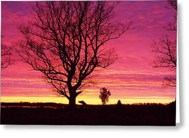 Eerie Greeting Cards - Oak Trees, Sunset, Sweden Greeting Card by Panoramic Images
