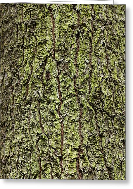 Concord Greeting Cards - Oak with lichen Greeting Card by Allan Morrison