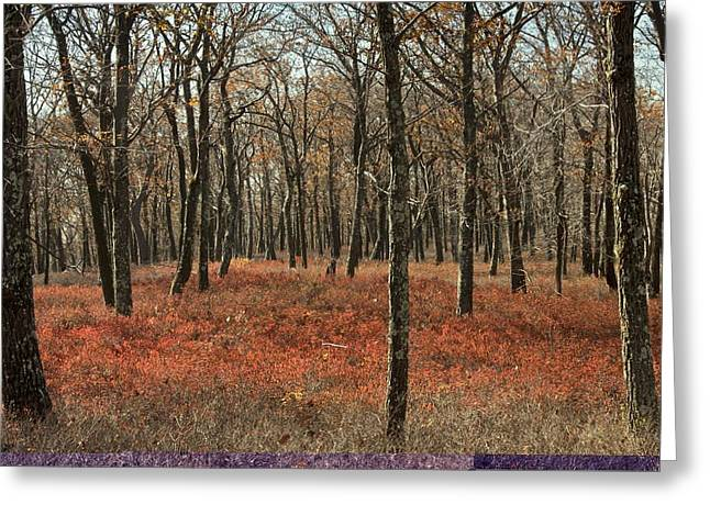 Huckleberry Greeting Cards - Oak woodland in autumn Greeting Card by Science Photo Library