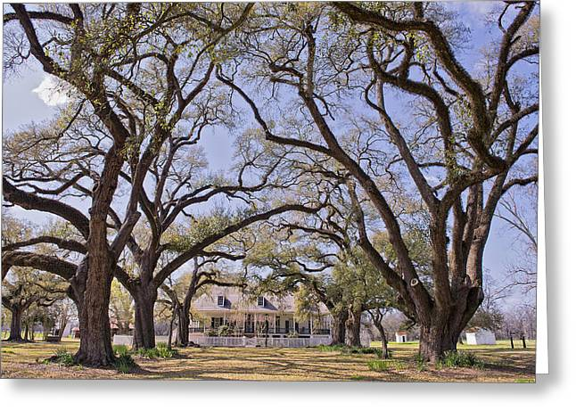 North Louisiana Greeting Cards - Oakland Plantation Greeting Card by Bonnie Barry