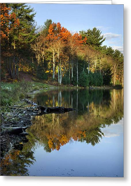 Oakley Corners State Forest Greeting Card by Christina Rollo