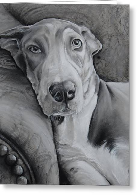 Harlequin Great Dane Puppies Greeting Cards - Oakley Greeting Card by Jean Cormier