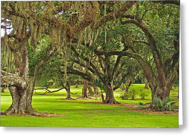 Louisiana Landscape Greeting Cards - Oaks and Spanish Moss in the Louisiana Bayou Greeting Card by Mountain Dreams