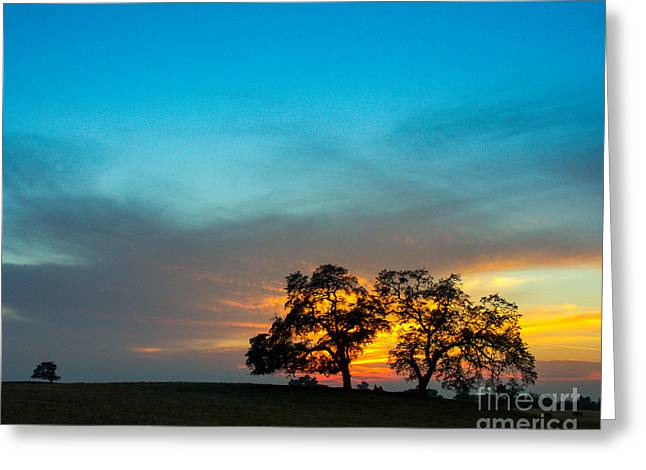 A Summer Evening Greeting Cards - Oaks and Sunset 2 Greeting Card by Terry Garvin