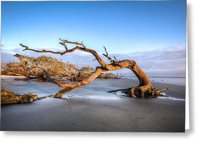 Foggy Ocean Greeting Cards - Oaks on Driftwood Beach Greeting Card by Debra and Dave Vanderlaan