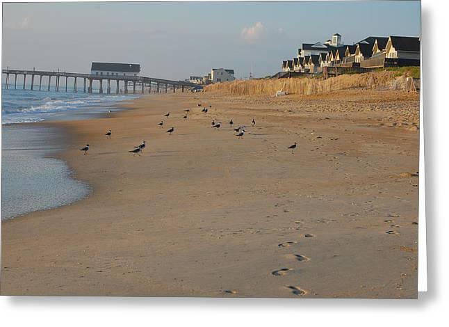 Bird Footprints In The Sand Greeting Cards - OBX Seagulls at Sunrise Greeting Card by Kristine McNamara